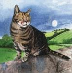 Přání Moon cat