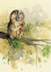 Notýsek Owl, 9*12 cm